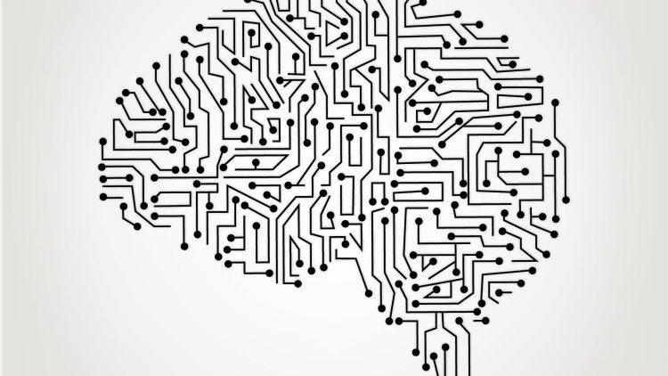 Information processing in the brain: let's talk about the central and autonomic nervous system